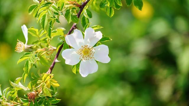 9836 - Flower