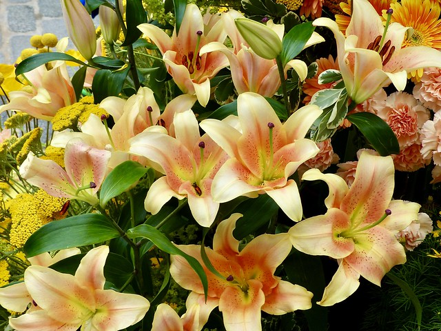 363. Beautiful Asian lilies on display in Flower Show 2021 in Meat Packing District, Manhattan, New York.