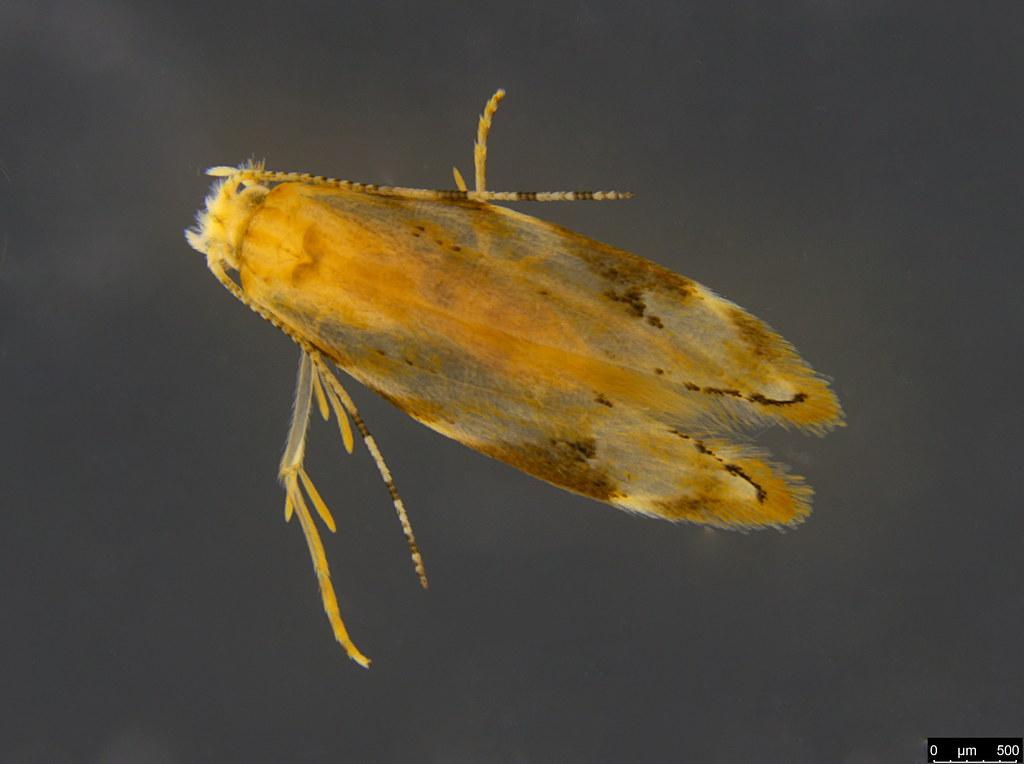 21b - Lepidoptera sp.