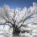 Arboretum Infrared