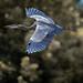 Heron banking Finley