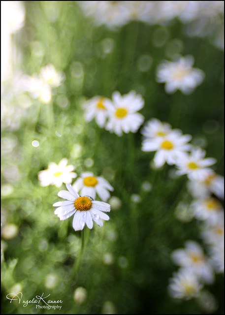I Love These Tiny Flowers...