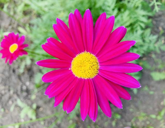 Россия Урал 2021 Russia Ural Цветок Flower
