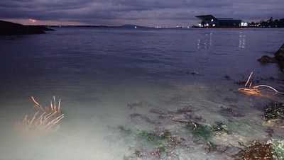 Large fish farm opposite living shores of Pulau Ubin