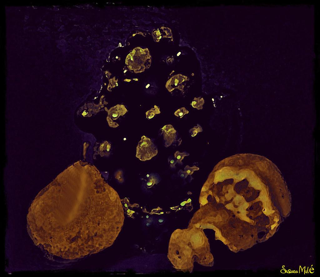 bodegón: uvas con pera y naranja