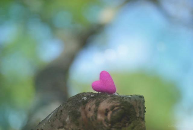 Hug a Tree... 💜