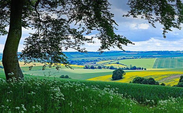 Aldbourne vista