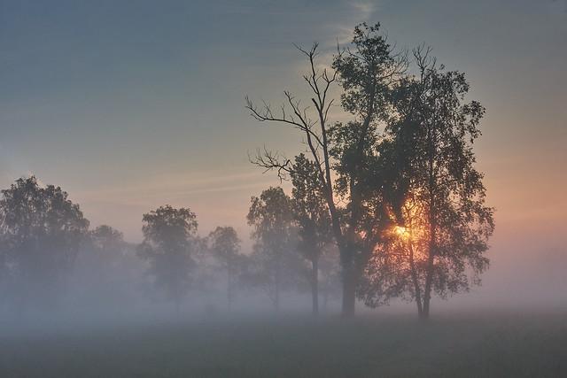 foggy morning mood