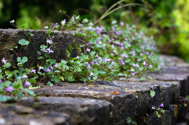 Brick Wall + Plants III