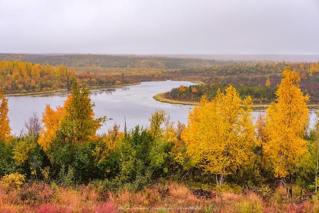 Rainy Fall Scenery Just North of Inuvik, Northwest Territories