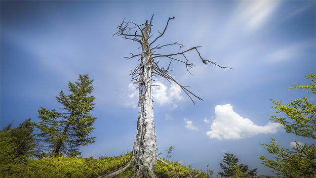 _DSC33000 On the ridge trail to Mt. Trapez and Mt. Steineck / Upper-Austria