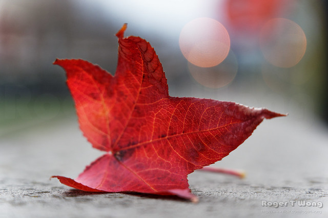 20210613-01-Red leaf
