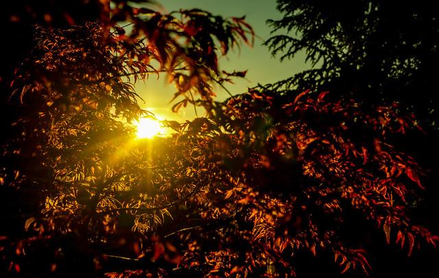 heure dorée-golden hour