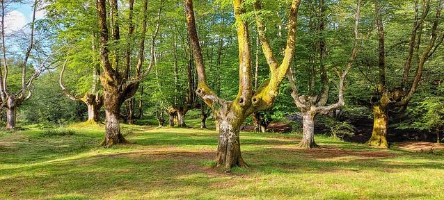 Por los bosques de Gorbeia.