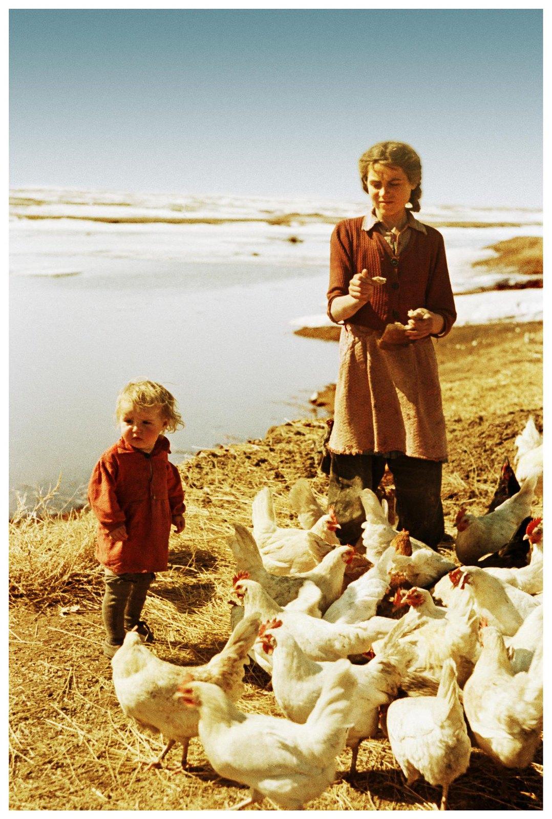 1954.  Первая весна на целине (девочки и куры)