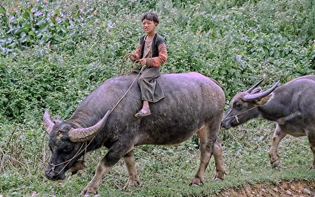 Vietnam - around Son La - young boy