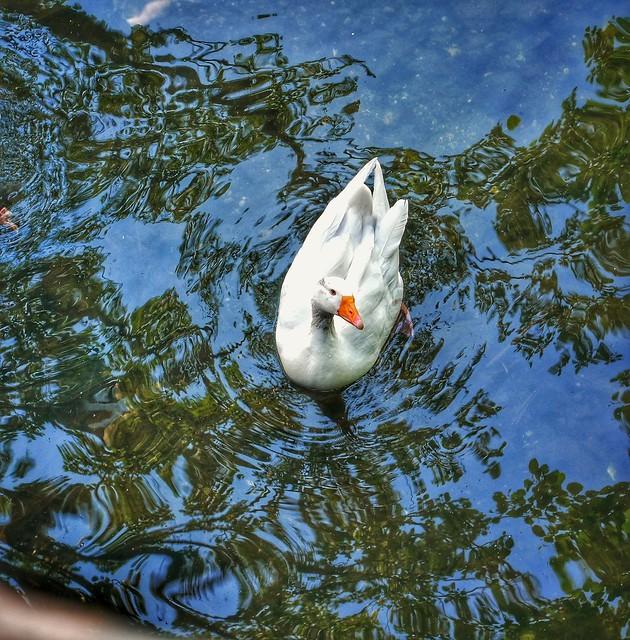 Reflections swim