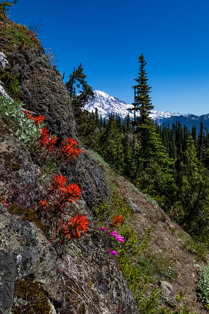 Indian Paintbrush along High Rock Lookout Trail