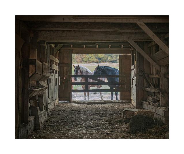 Amish Engines