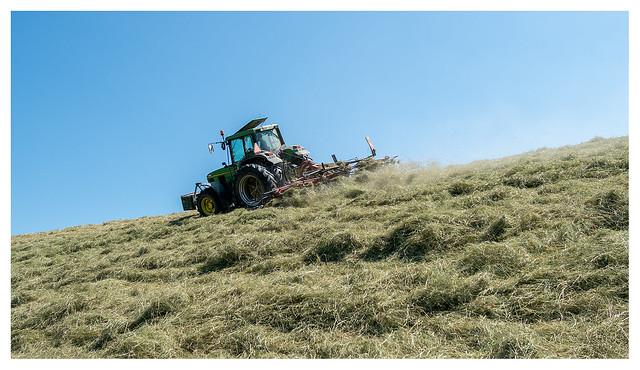 Making hay on Sunday