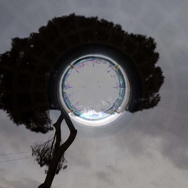 Rome :arbre et coupole