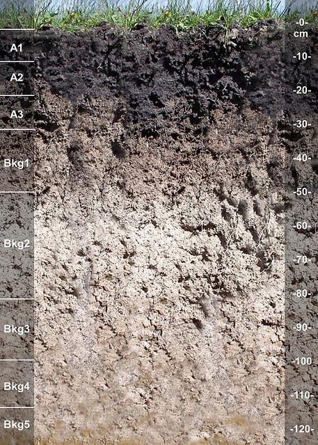 Cedron soil series ID