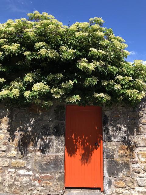 orange door (164/365)