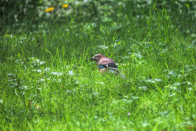 Lost in Grass