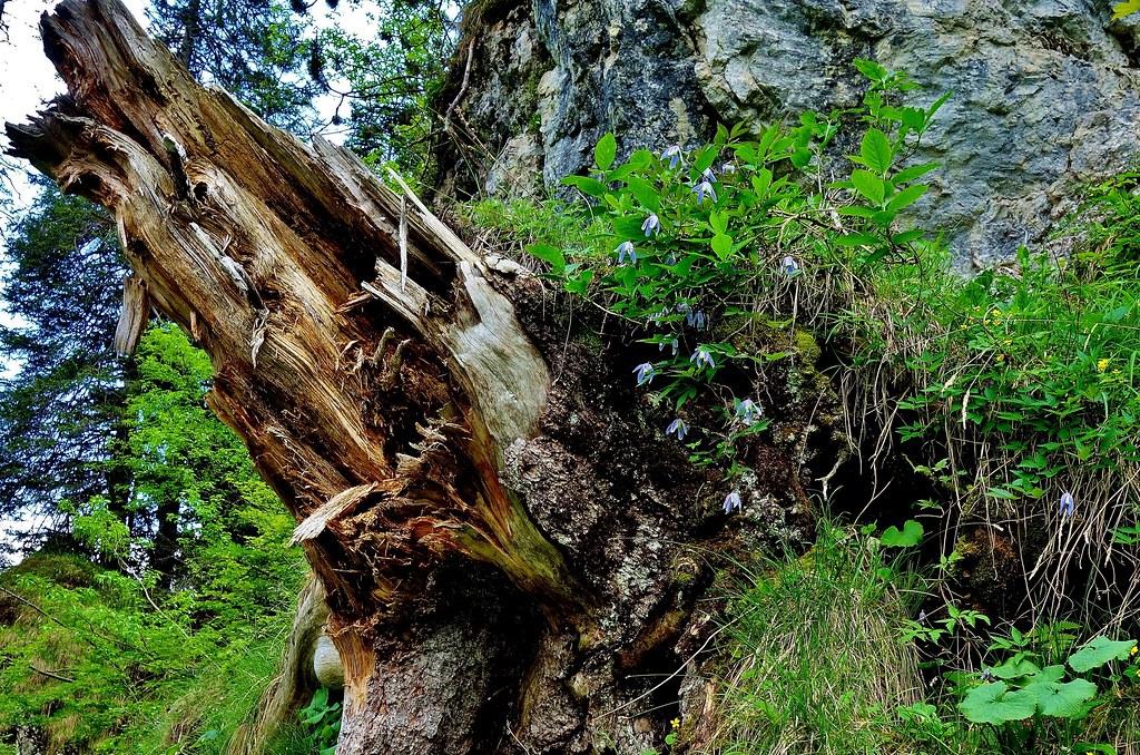 Italien, Rund um Molveno/Trento-(Dolomiten) Brenta-Gebirge, Am Rifugio Selvata, Monster, 79098/13755