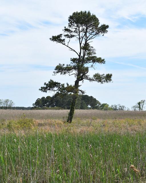 Single Tree in Grasslands