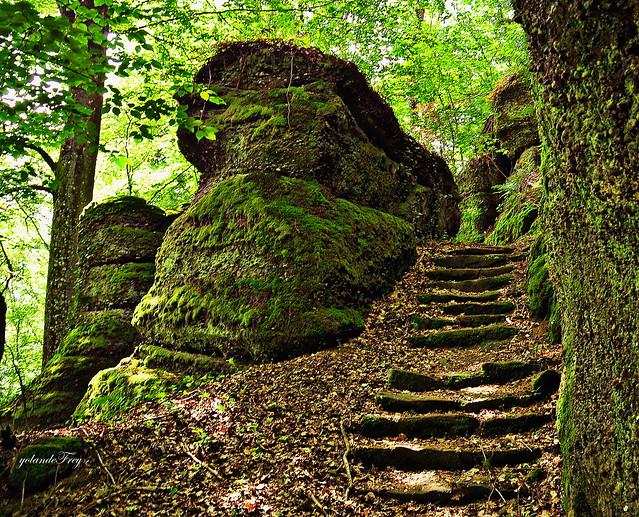 Au coeur de la forêt alsacienne...
