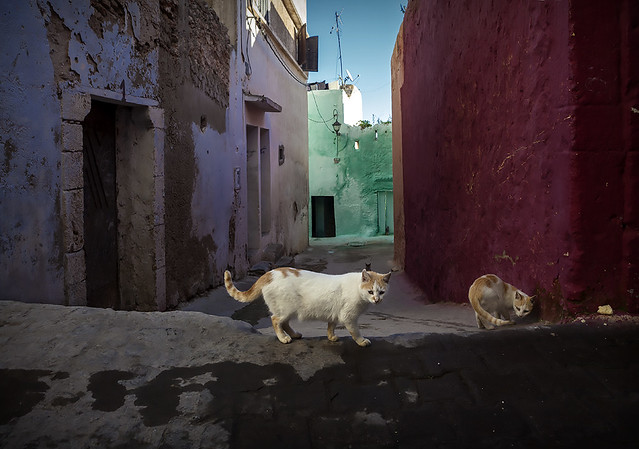 Street cats (Azemour, 2013)
