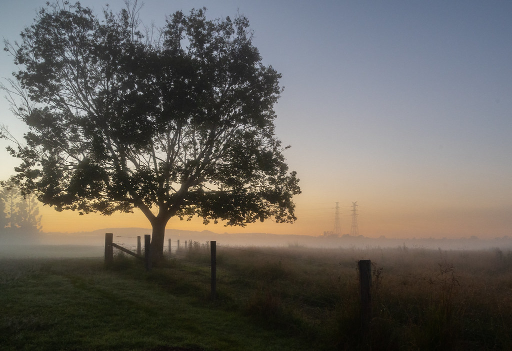 Tree at dawn, Oxley Common