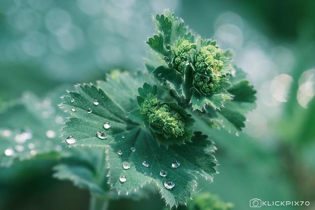 Green Blurr