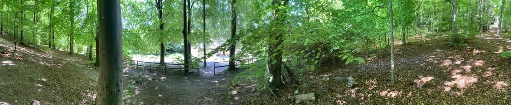 Queen Elizabeth Country Park walk 29
