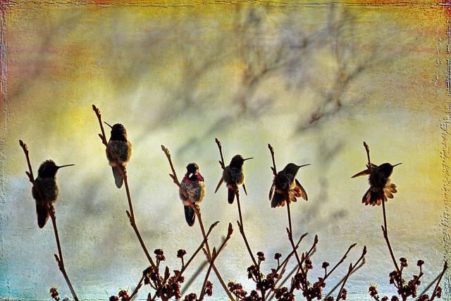 a hummingbird of love