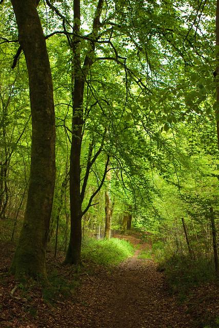 Leafy Green 4434