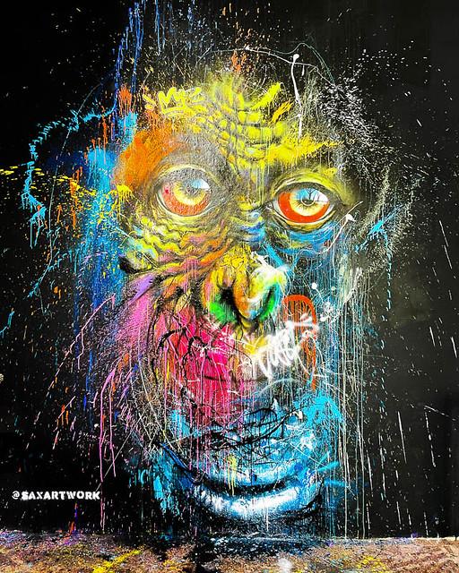 le regard du Bonobo