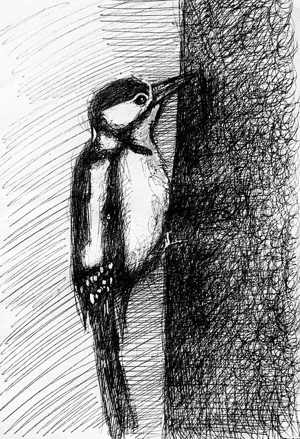 Lesser Spotted Woodpecker. Ballpoint pen drawing by jmsw on recycled card highlights in Gouache. Only on this site, just for Fun.