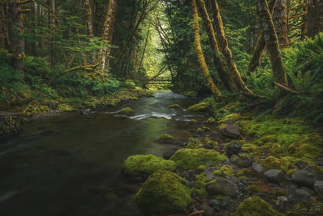 Enchanting Olympic Woodlands 2021
