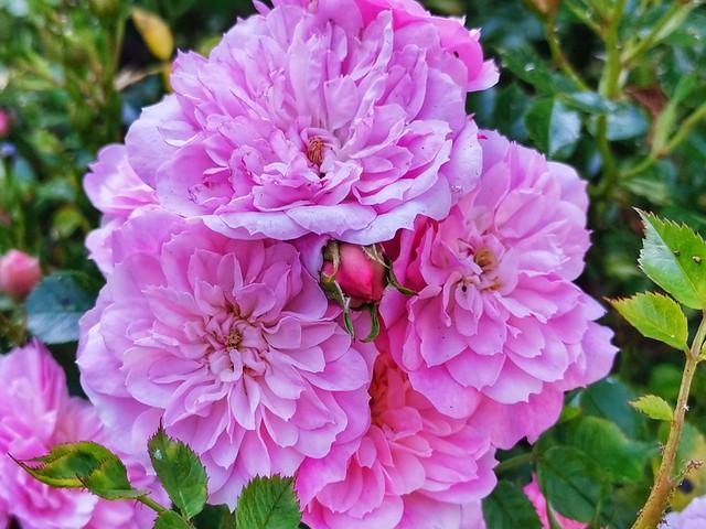 A bouquet for u