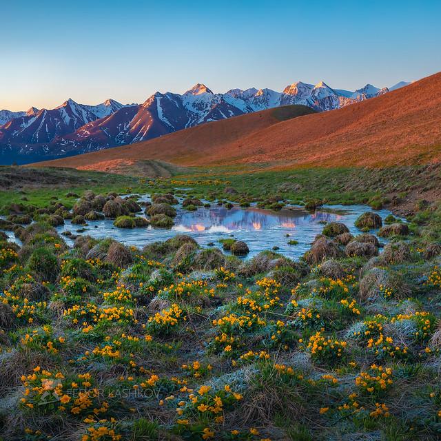 Spring landscape at sunrise