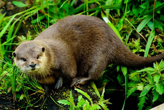 Otter 3  Wetlands 2021