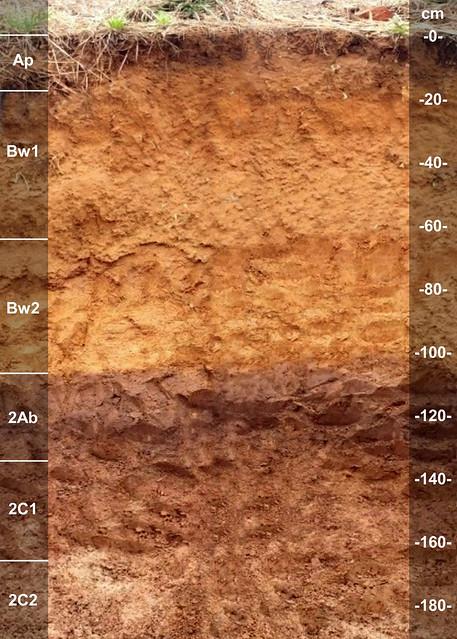 Sharon soil series KY