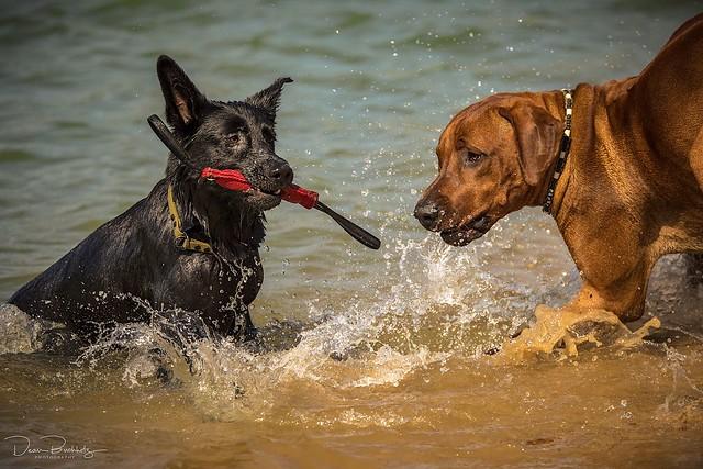Tiara + Benji beim spielen im Wasser