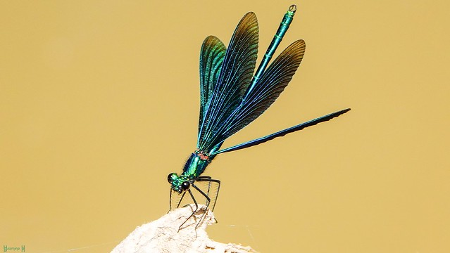 9839 - #PickTwo Delicate Insect