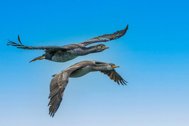 Partners in Flight