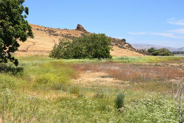 Coyote Hills Regional Park (2)