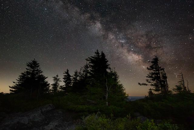 Trees &Stars