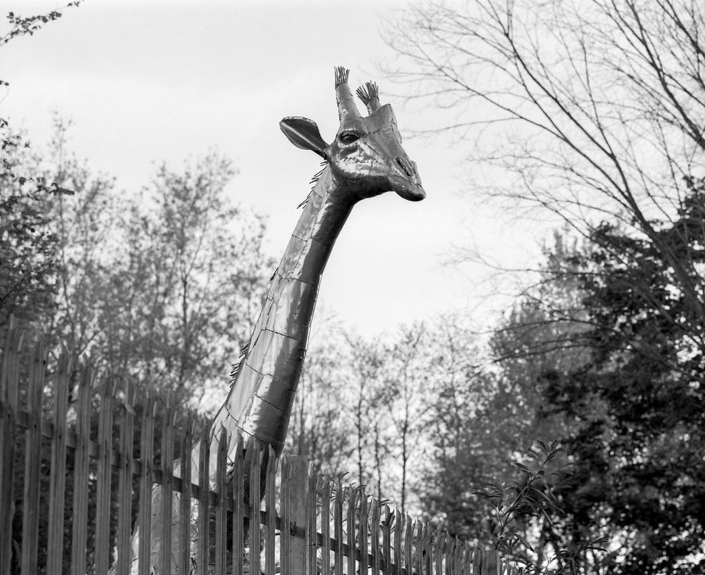 Day 149 (29th May) - Metallic Giraffe